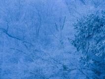Frost im Wald der Schweizer Alpen Lizenzfreie Stockbilder