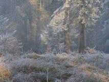 Frost im Wald der Schweizer Alpen Stockbild