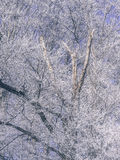Frost im Wald der Schweizer Alpen Stockfotografie