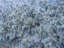 Frost im Wald der Schweizer Alpen Stockfotos