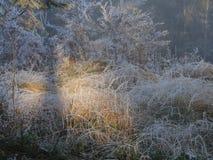Frost im Wald der Schweizer Alpen Lizenzfreies Stockbild