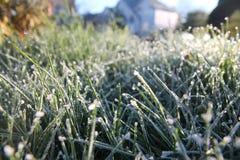 Frost a incliné l'herbe Photo libre de droits