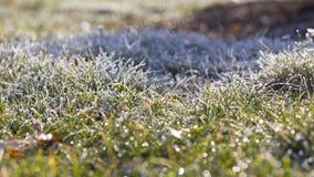 Frost küsste Gras stockfoto