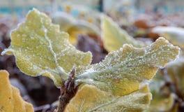 Frost kantade sidor royaltyfri bild