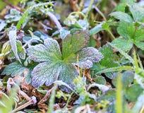 Frost-Kristalle am frühen Morgen Stockfoto
