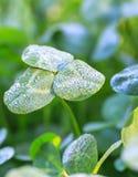 Frost-Kristalle am frühen Morgen Lizenzfreie Stockfotos