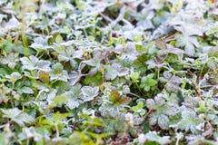 Frost-Kristalle am frühen Morgen Lizenzfreies Stockbild