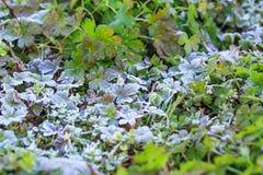 Frost-Kristalle am frühen Morgen Lizenzfreie Stockfotografie