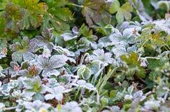 Frost-Kristalle am frühen Morgen Stockbilder