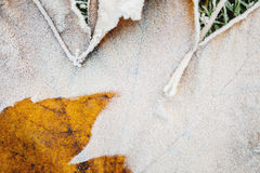 Frost on leaf Royalty Free Stock Image