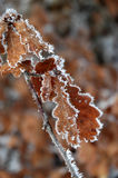 Frost on leaf Stock Photos