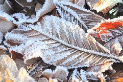 Frost, Leaf, Freezing, Winter Stock Photos