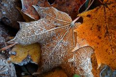 Frost on the leaf and grass. Frost on the autumn leaves and grass Royalty Free Stock Photos