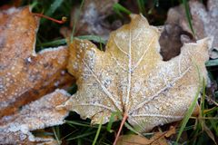 Frost on the leaf and grass. Frost on the autumn leaves and grass Stock Photo
