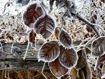 Frost on Leaves Royalty Free Stock Photos