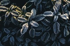 The frost on the leaves. A The frost on the leave royalty free stock photography
