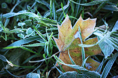 Frost on leaves Royalty Free Stock Images