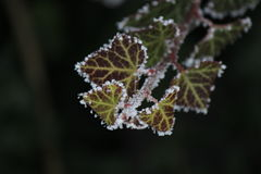 Frost on leaves.Very good image Royalty Free Stock Photography
