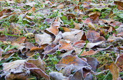 Frost on meadow Royalty Free Stock Images