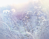 Frost in meadow, cobweb on dry grass Stock Image