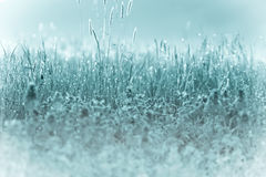 Frost in a meadow Royalty Free Stock Image