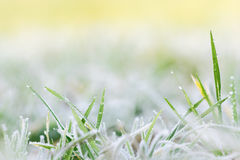 Frost Melting on Grass. A detailed image showing frost melting and turning into drops of water as it hanging from grass.  The image gradually fades into pretty Royalty Free Stock Photos