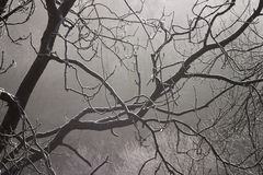 Frost and mist. Branches of a tree with frost on in misty weather stock photography