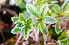 frost in morning  Stock Image