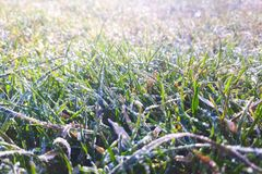 Frost moulu sur un pré et une herbe photos stock