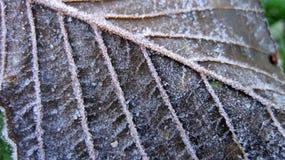 Frost na folha de Brown Foto de Stock Royalty Free