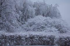 Frost nach Tauwetter Stockbilder
