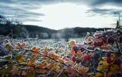 Frost nas folhas Fotos de Stock Royalty Free