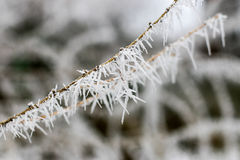 Frost Needles. White frost on thin branch Stock Photography