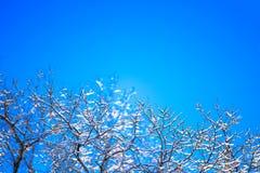 Frost-Niederlassungen über blauem Himmel Lizenzfreies Stockbild