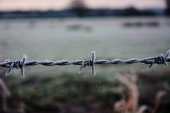 Frost no arame farpado Imagens de Stock