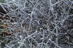 Frost nos ramos fotos de stock