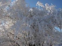 Frost. Imagem de Stock Royalty Free