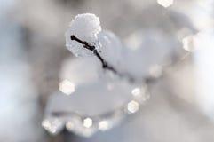 Frost nos ramos de uma árvore Fotos de Stock