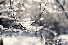 Frost nos ramos de uma árvore Imagem de Stock Royalty Free