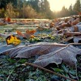 Frost November Stock Image