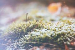 Frost och is på mossigt gräs Royaltyfria Bilder