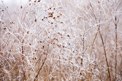 Free Frost On The Branches Royalty Free Stock Photos - 78044958