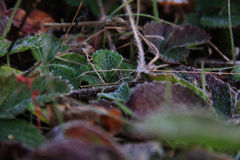 Frost. Оnce a cold autumn morning Royalty Free Stock Photography
