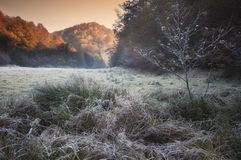 Frost over grass on an autumn morning with sunrise light. Shining Royalty Free Stock Image
