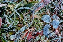 Frost på blad Fotografering för Bildbyråer