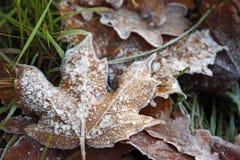 Frost på bladet och gräset Fotografering för Bildbyråer
