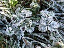 Frost på Charles Wood Fotografering för Bildbyråer