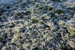 Frost på enträdet Fotografering för Bildbyråer