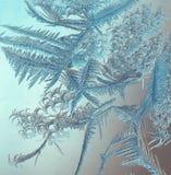 Frost på fönstret Royaltyfria Bilder