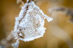 Frost på filial av växter på soligt winterday royaltyfria foton